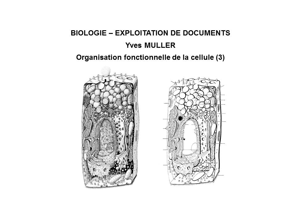 BIOLOGIE - EXPLOITATION DE DOCUMENTS :  Organisation fonctionnelle de la cellule - 3ème Partie 'La membrane de la cellule'