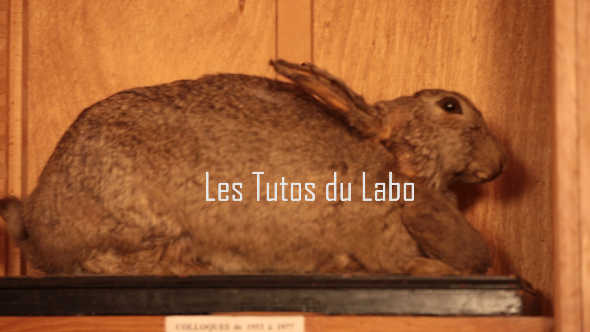 Les Tutos du Labo - Convolution